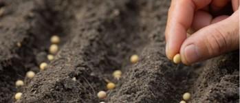 Investigación de semillas